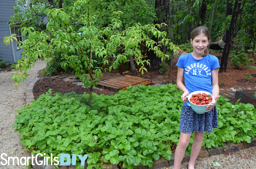 Smart Girls DIY- Strawberry picking in the back yard