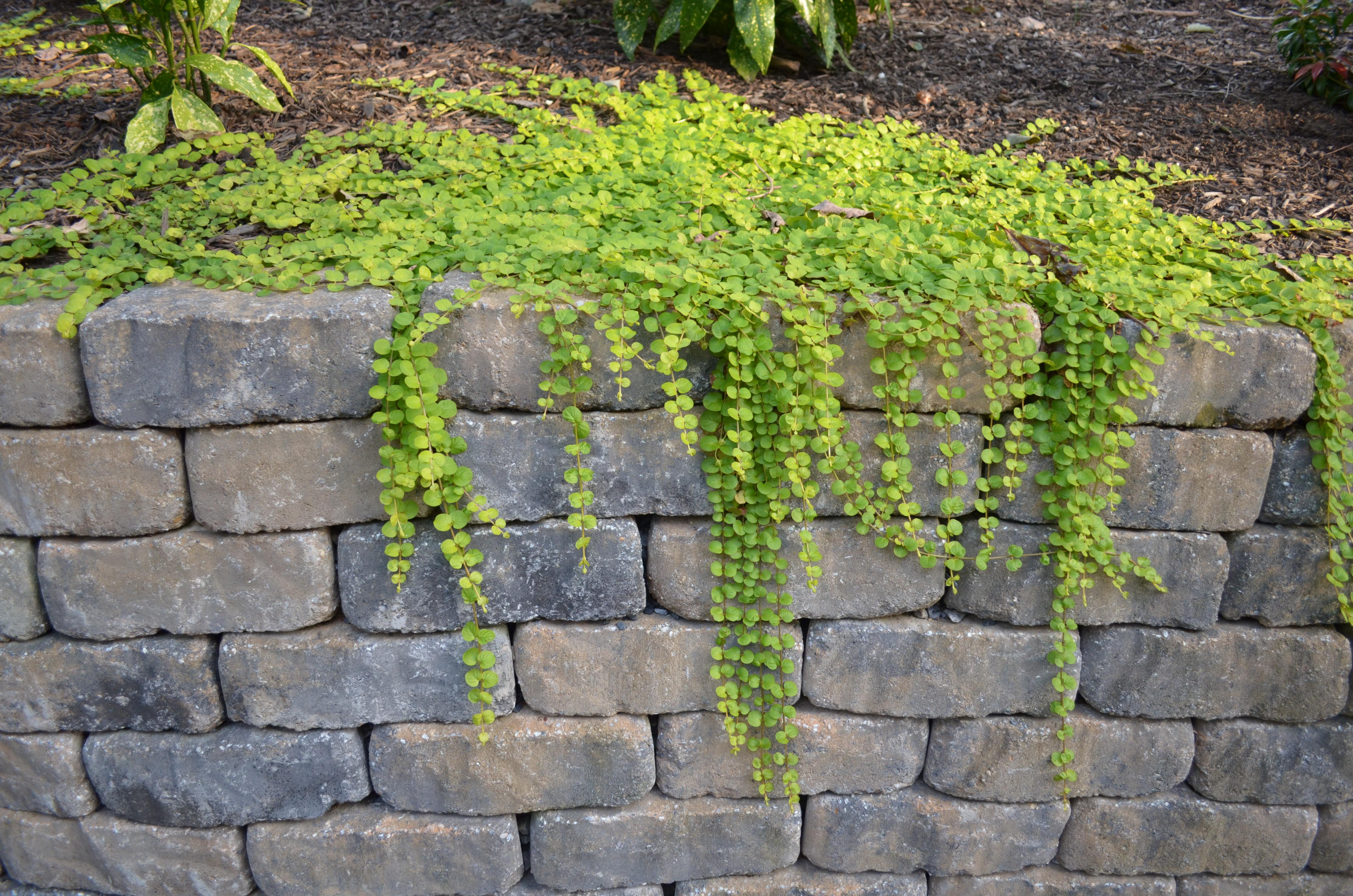 Week 15 – Garden Pics by Smart Jr.