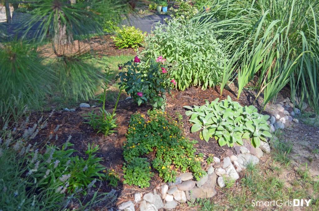 Smart Girls DIY - Garden #2