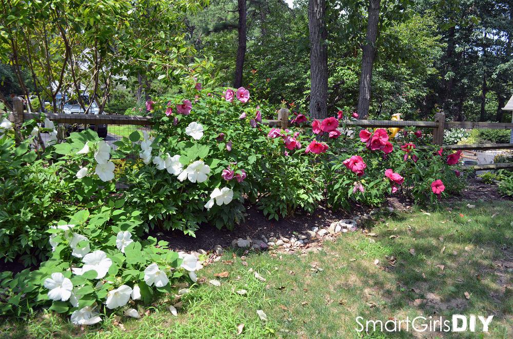 Smart Girls DIY - Garden #4