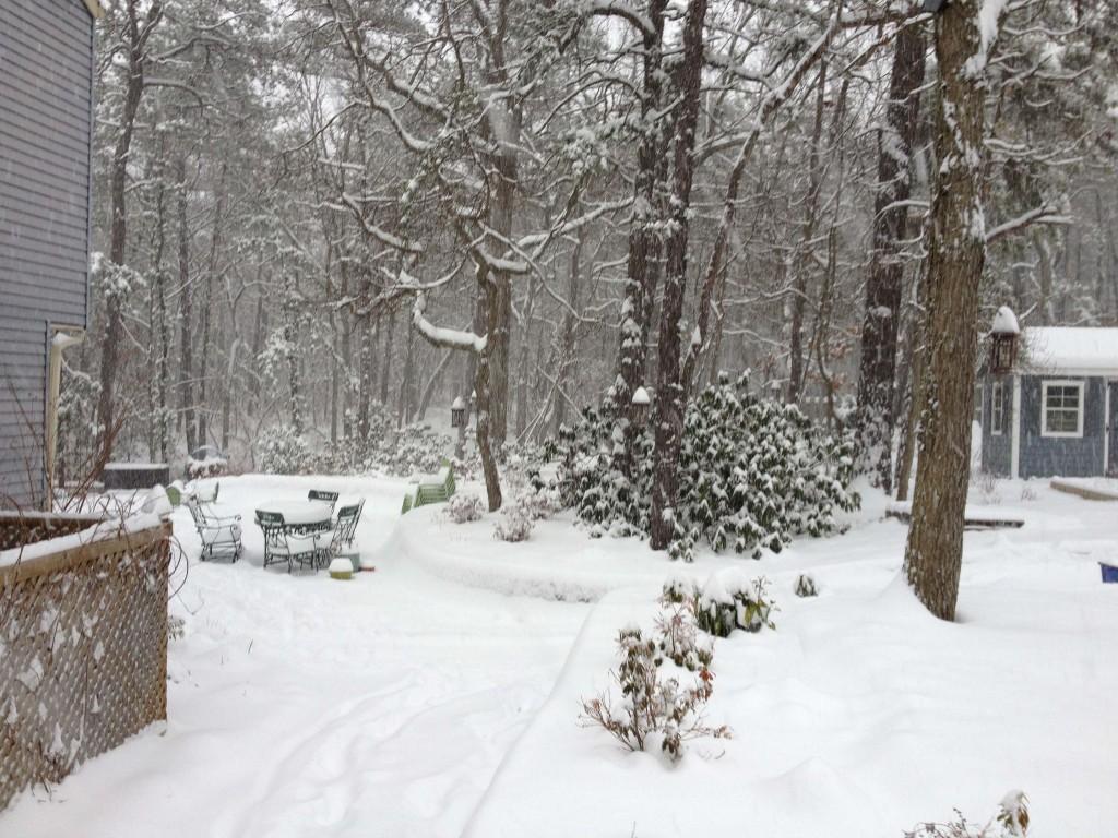 Wintery Sideyard