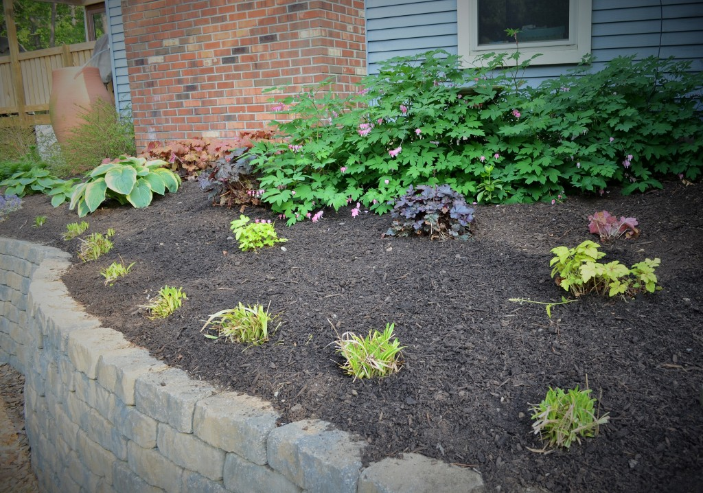 Our shady garden bed with fresh mulch -- Love the bleeding hearts!
