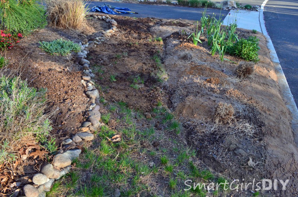 Using compost to start grass seed