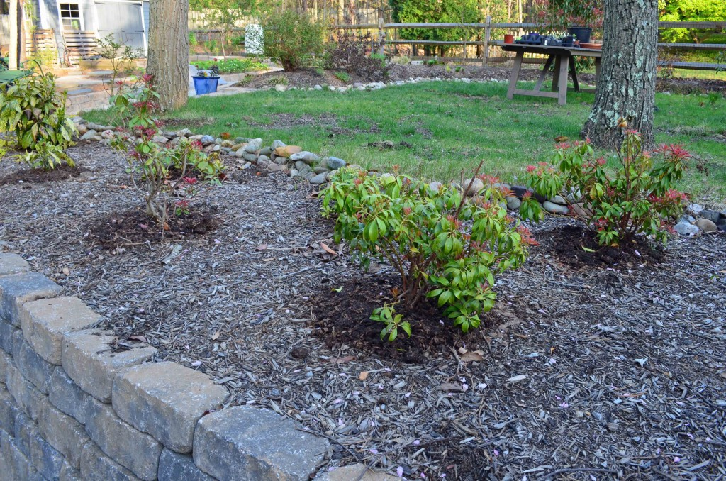 compost added around established plants
